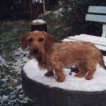 Lisa im Schnee